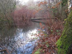 Old route of canal at Ynystawe