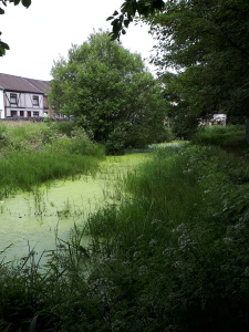 The last few yards of the Swansea Canal in Clydach.